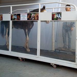 Underwater Treadmill for  Horse