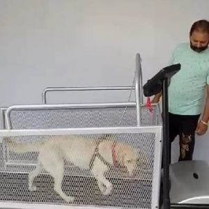 """Dog Treadmill for """"Me"""" and """"My Dog"""""""