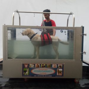 Underwater Treadmill for Canines & Small animals  with Double Door